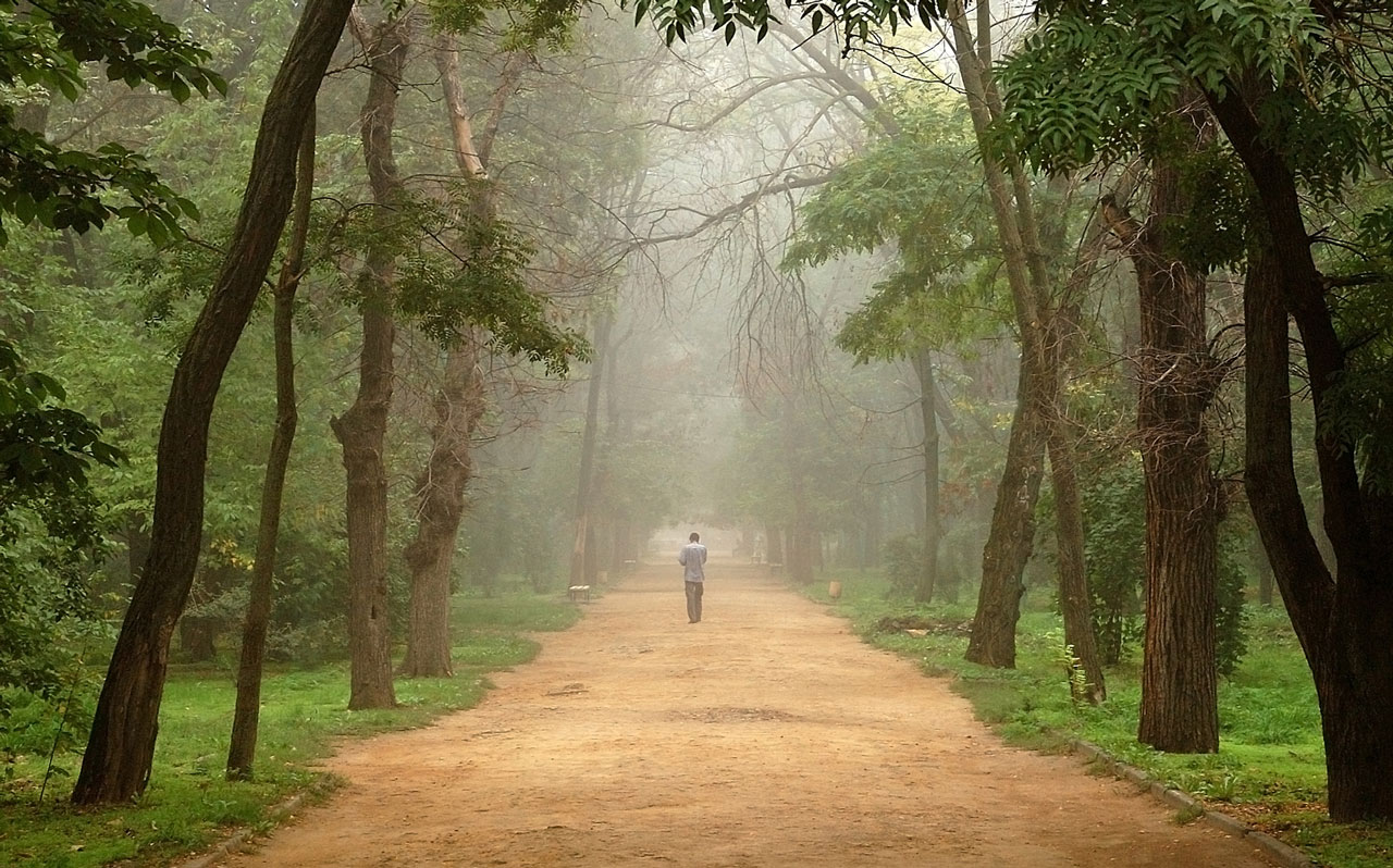 Ein Mensch geht einem geraden Weg entlang, links und rechts sind hohe Bäume